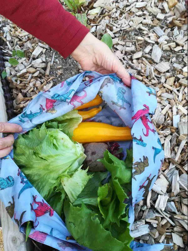 Courgettes, betteraves, salades... le jardin partagé est d'ores et déjà productif !
