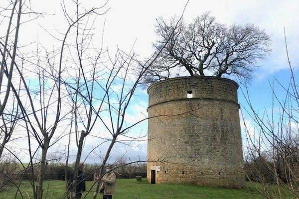 Le chêne du pigeonnier de Pouzay à Béceleuf
