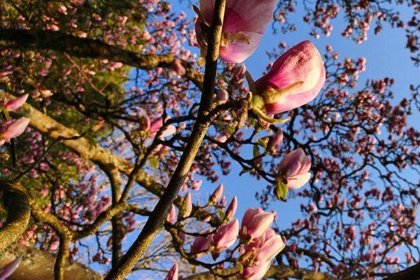 Giboulées et ciel bleu rendent les arbres heureux