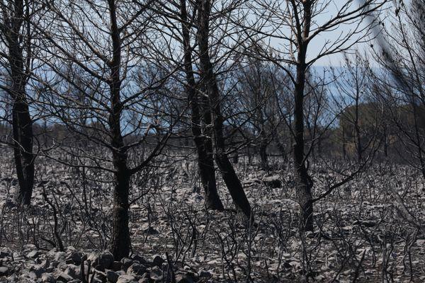 Un paysage calciné après l'incendie de Martigues