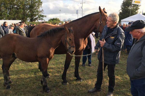 La traditionnelle foire aux chevaux en ouverture