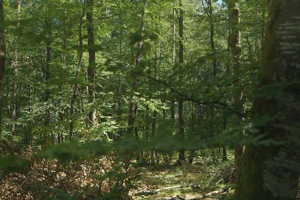 Forêt morvandelle