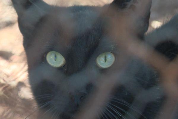 Chat abandonné et recueilli dans un refuge de Nîmes en septembre 2021