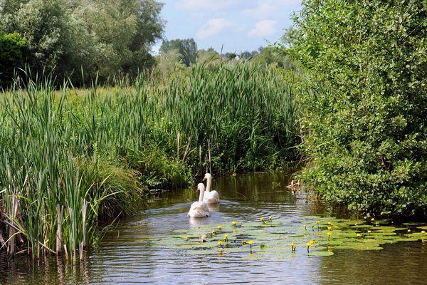 La réserve naturelle des étangs du Romelaëre, au coeur du marais audomarois, en avril 2013.