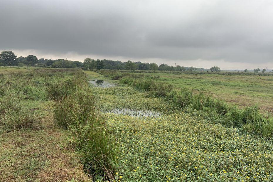 Loire-Atlantique : privé d'entretien depuis des années, le marais de Saint-Viaud en danger de mort