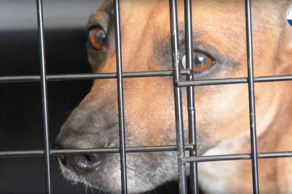 L'un des 17 chiens sauvés par la LPA-NF.