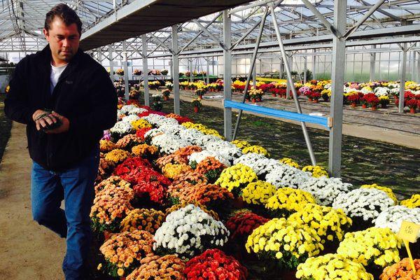 Nicolas Mouette est horticulteur à Beaumont-sur-Sarthe