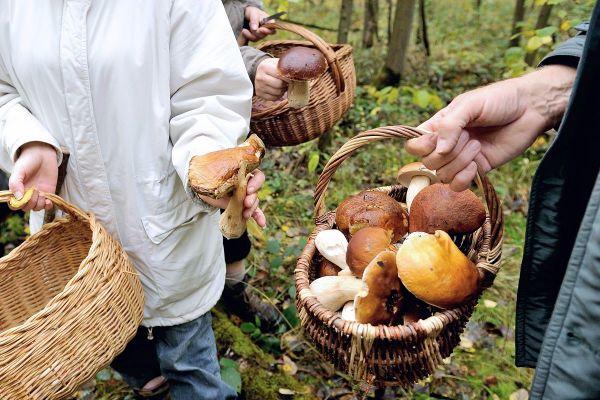 Depuis le 22 septembre, l'automne est de retour et, avec lui, la saison des champignons en Auvergne.