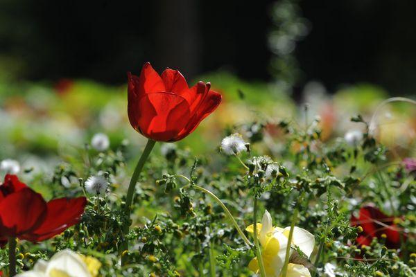 C'est le printemps à Angers à Terra Botanica