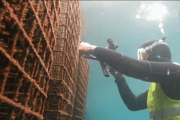 Biodiversité : 50 cages métalliques immergées dans le port de Saint-Florent (Haute-Corse) pour servir de pouponnière artificielle.