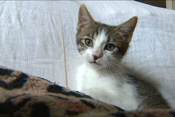 Un chaton errant recueilli à Norges-la-Ville (21).