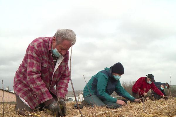 De nombreux bénévoles sont venus planter des arbres ce samedi à Saint-Orens (31).