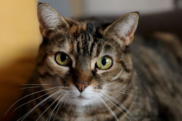Le tortionnaire de chat caennais interpellé