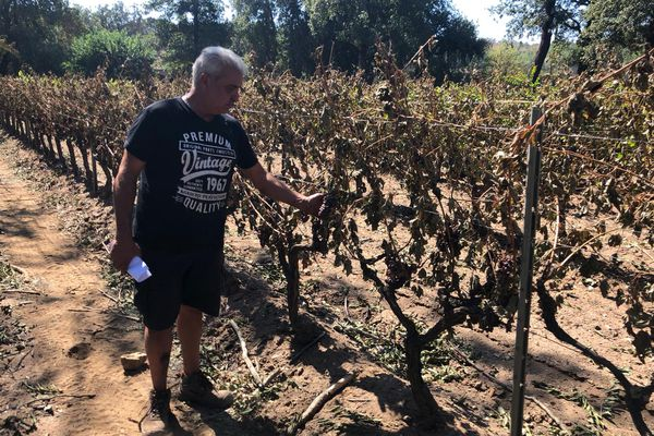 Pierre Audemard, vigneron dans le Var, constate les dégâts causés par les incendies sur sa production viticole.