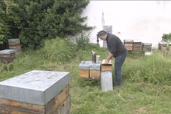 Trop de pluie pour les abeilles !
