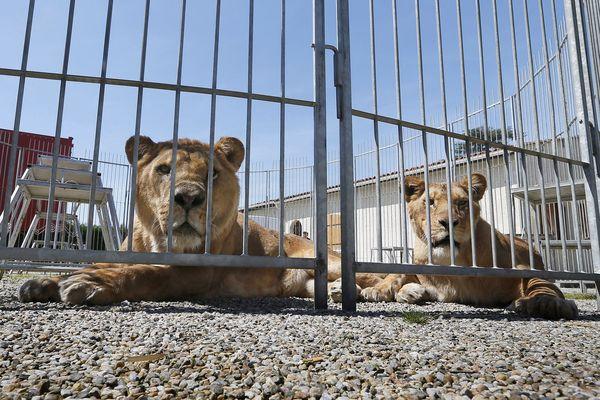 La ville de Montpellier a interdit la représentation d'animaux sauvages dans les cirques.