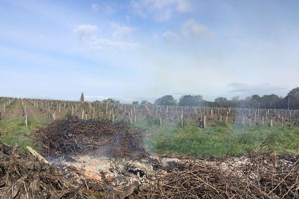 Les viticulteurs ont travaillé préventivement sur le gel, dans le vignoble nantais, le 4 avril 2019