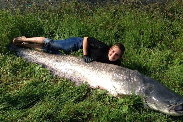 Christelle a sorti un silure de 244 cm pour une centaine de kilos au lac de Bouchemaine près d'Angers