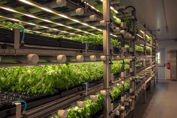 L'agriculture ou ferme verticale consiste en la superposition de niveaux de cultures dans un bâtiment.