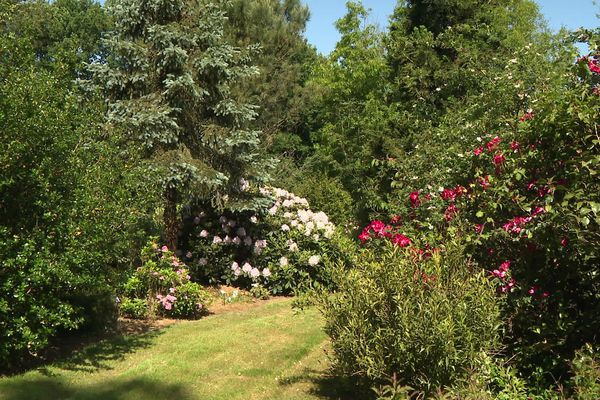 Les jardins d'Ewen : entre arbres centenaires et collections de plantes sauvages .