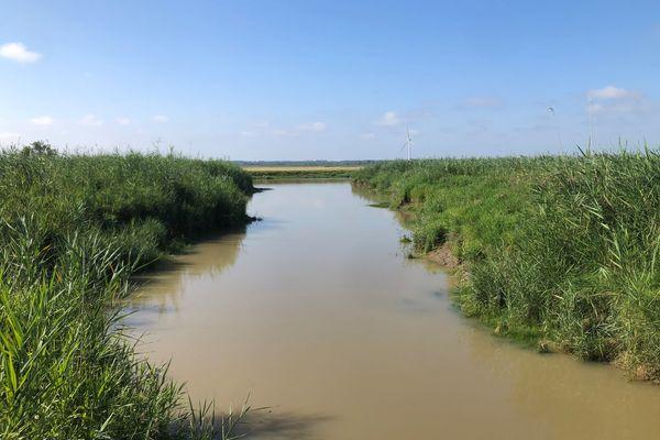 Dans l'estuaire de la Loire, plus de 230 espèces d'oiseaux sont recensées.