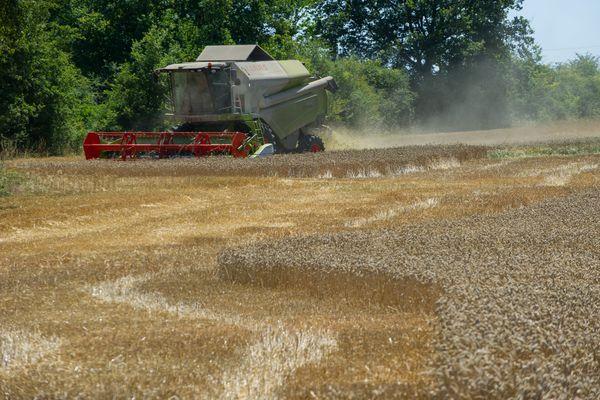 Illustration. La sécheresse et les insectes ravageurs perturbent les récoltes de colza depuis plusieurs années.