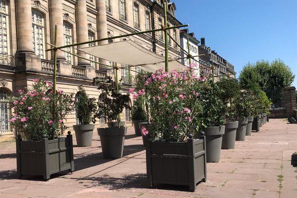 Des plantes et un auvent sur la terrasse Rohan.