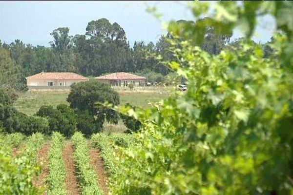 ILLUSTRATION - La SAFER Corse a pour mission principale de protéger les terres agricoles