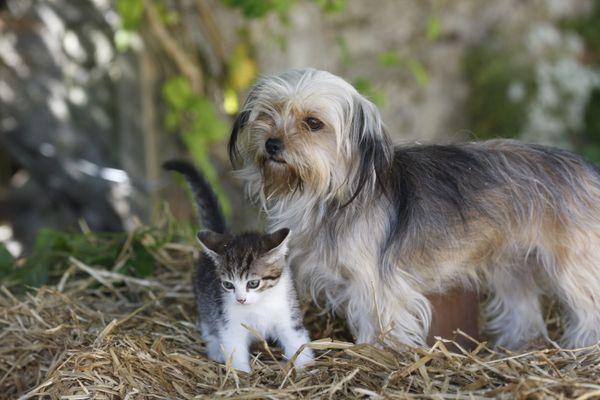 Le nombre de chats enregistrés dans l'Hérault en 2019 a dépassé celui de chiens