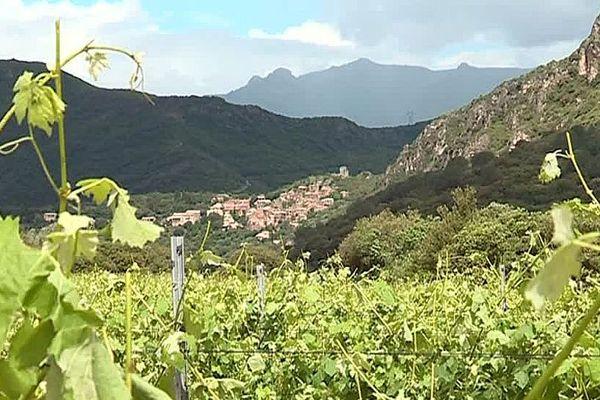 Vieussan (Hérault) - le vignoble AOC Saint-Chinian - mai 2018.