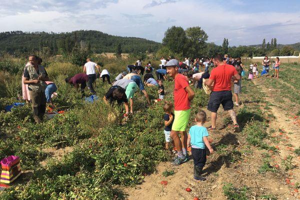 Près de 30 tonnes de tomates ont été donnés par un agriculteur d'Upie (Drôme), pour éviter que les fruits ne soient jetés.