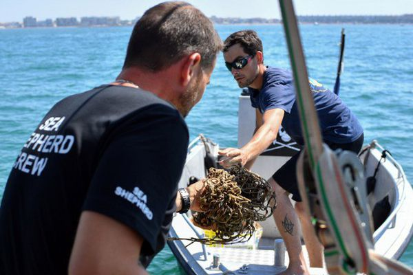 L'ONG Sea Shepherd a lancé ce vendredi sa troisième opération de chasse aux filets fantômes - 4 août 2016