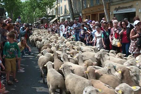 La fête de la transhumance à Salon-de-Provence