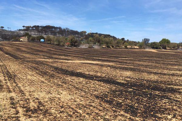 La sécheresse laisse les terrains propices aux départs d'incendies comme à Générac dans le Gard. Ici un champs asséché est parti en fumée.