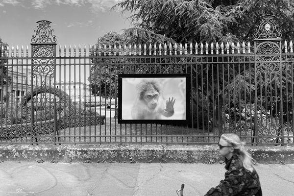 """Les photos de Bernard Plossu, en immersion dans cinq musées de Bordeaux, s'exposent sur les grilles du jardin public et à la galerie """"arrêt sur l'image"""""""