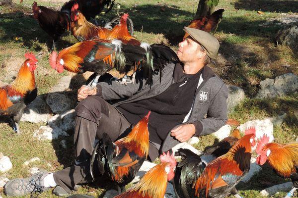 Damien Vidart, éleveur amateur de poules, lance un plan de sauvegarde de la race gauloise.