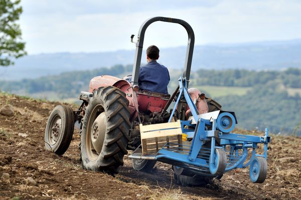 Un éleveur dans son champ de pommes de terre - Photo d'illustration