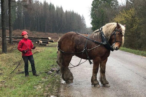 Isabelle et son cheval Caramel, un hongre comptois de sept ans. Ils travaillent ensemble pour sortir les grumes d'épicéa des parcelles des champs de bataille de la Première Guerre mondiale à Verdun.