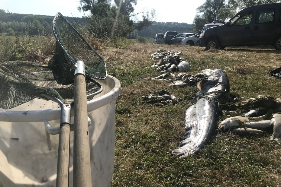 three tons of dead fish due to pollution – World Today News