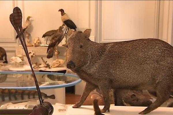80 spécimens d'animaux naturalisés ont été endommagés