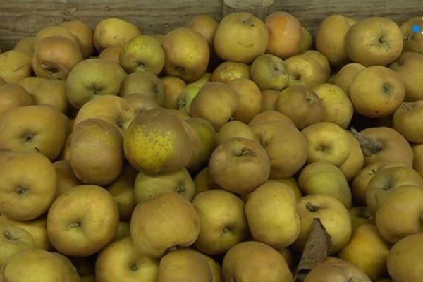 Les pommes Canada de Charlotte
