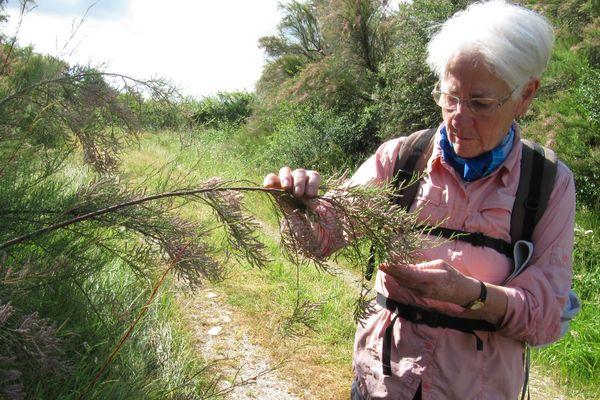 Marie-Claude observe la rosée sur les tamaris.