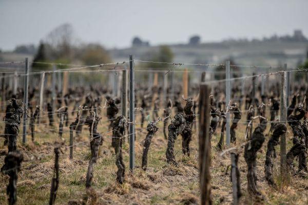 La période de gel de début avril a durement touché certains vignerons franciliens. (Illustration)