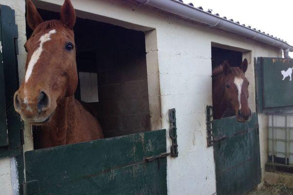 Des chevaux du refuge de Floing dont l'avenir est incertain