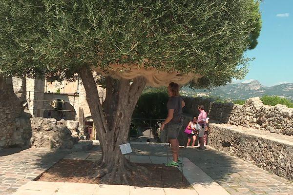 """""""La nébuleuse des dryades"""", oeuvre de Charles Le Hyaric, est venue se lover dans un olivier à l'extrême sud du village, dans le cadre de la Biennale d'art contemporain de Saint-Paul de Vence."""