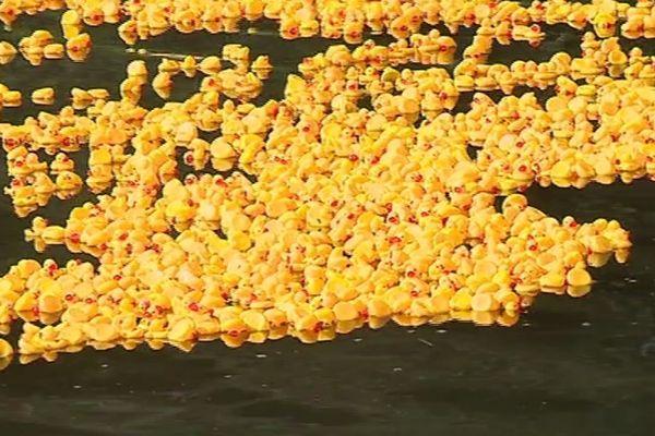 Les numéros étaient inscrits en-dessous des canards.