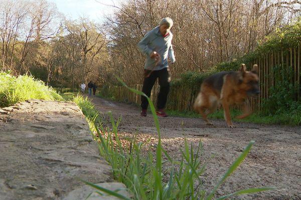 Un coureur et son chien dans un parc des Alpes-Maritimes.