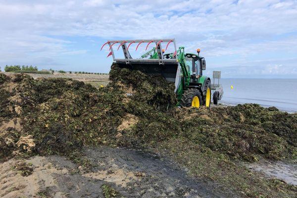 La tractopelle entre en action pour ramasser les algues qui envahissent la plage.