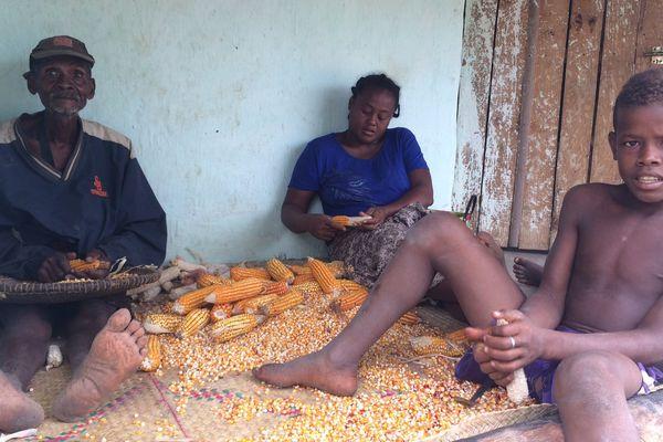 Famille triant du maïs pour la cuisine de l'écolodge