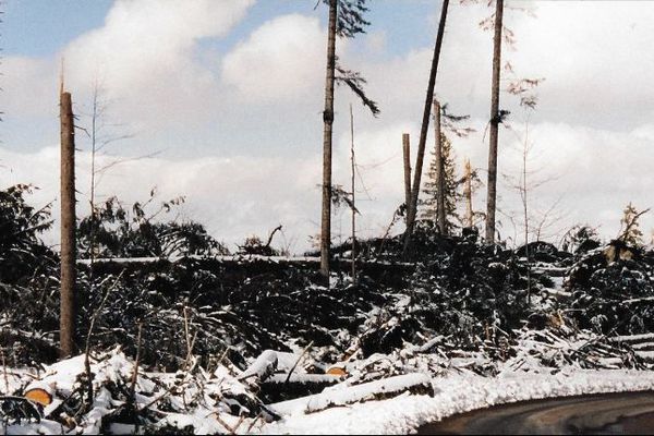 Aux Longevilles- Mont d'Or, les arbres n'ont pas résisté à la tempête.